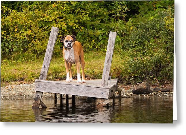 Boxer On Lake Dock Greeting Card