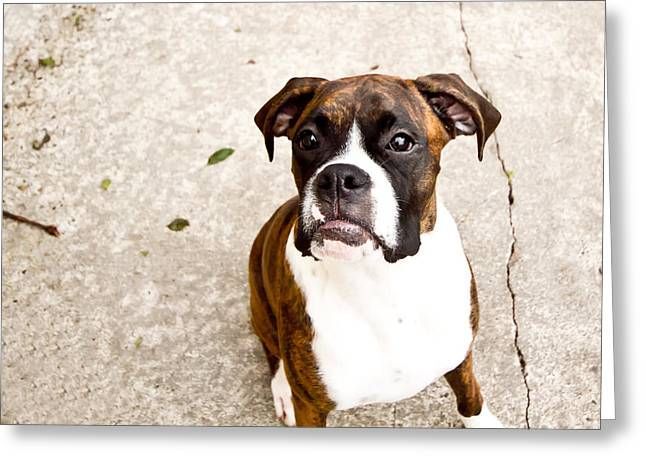 Boxer Greeting Card by Paulina Szajek