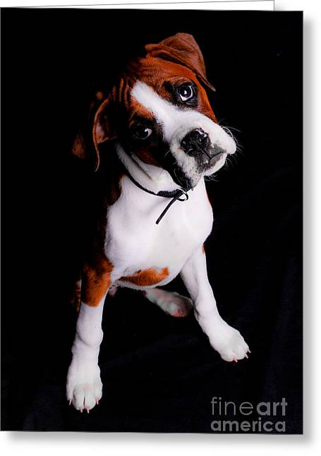 Boxer Pup Greeting Card by Jt PhotoDesign