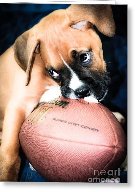 Boxer Puppy Cuteness Greeting Card