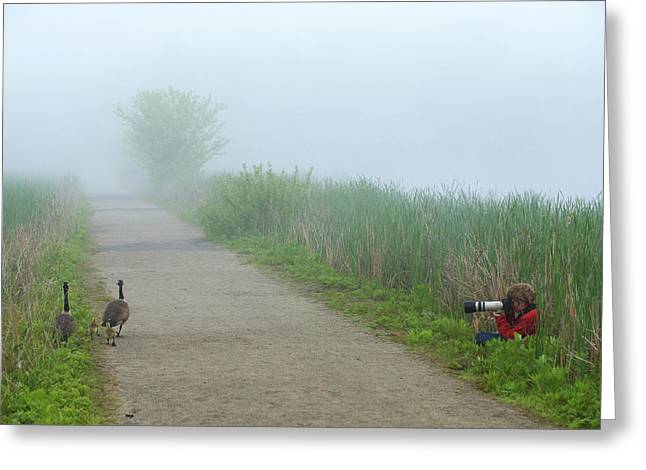 Boy Photographing A Pair Of Geese Greeting Card by Tim Laman