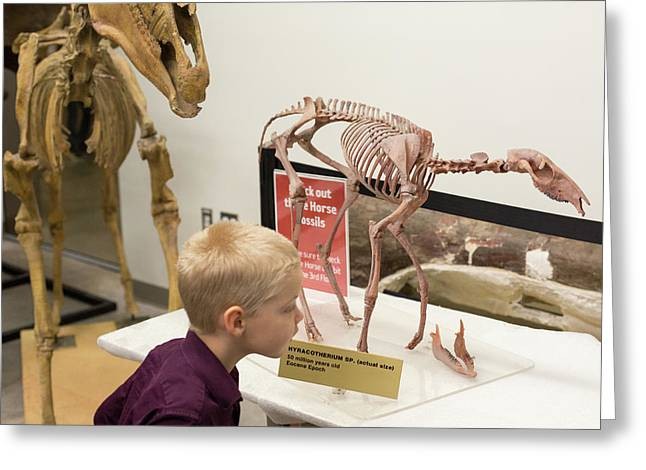 Boy With Ancestral Horse Fossil Greeting Card