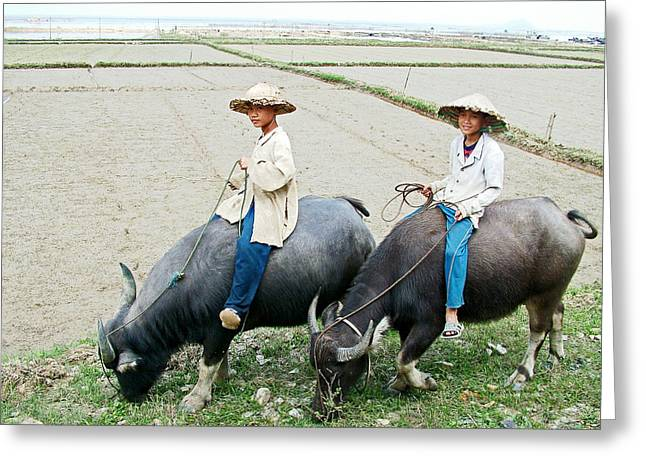 Greeting Card featuring the photograph Boys On Water Buffalo In Countryside-vietnam by Ruth Hager