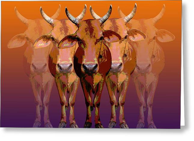 Brahman Cow Greeting Card by Jean luc Comperat