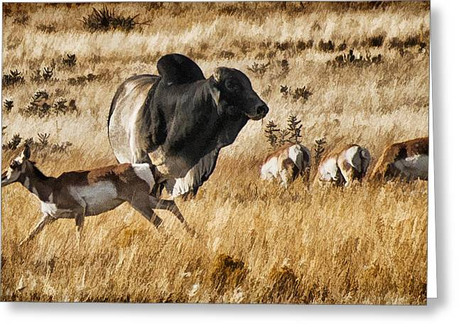 Brahma Bull Meets The Pronghorn Greeting Card by Priscilla Burgers