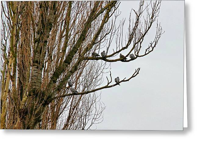 Branch Meeting Greeting Card by Kevin F Cook