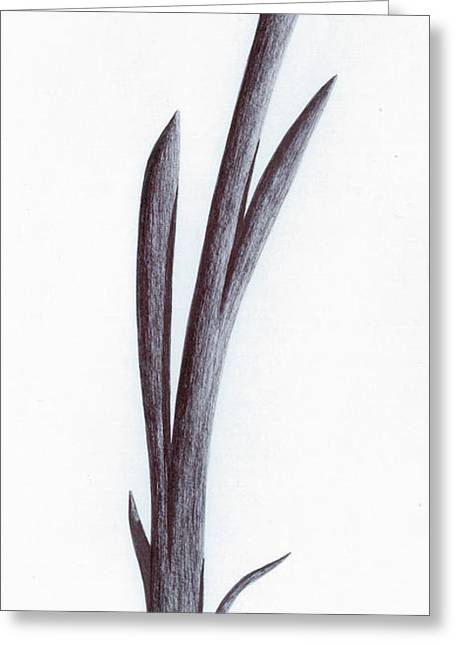 Branch Of A Fragment Of Life Greeting Card