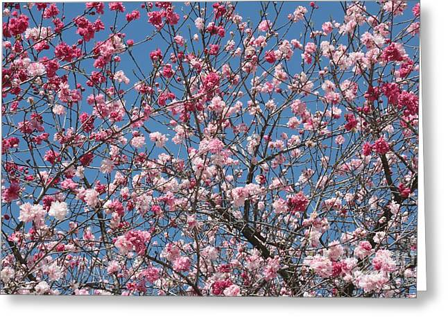 Branches And Blossoms Greeting Card by Carol Groenen