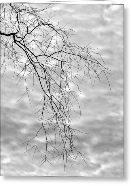 Branches And Clouds Greeting Card by Robert Ullmann