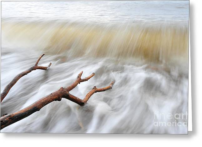 Branches In Water Greeting Card by Randi Grace Nilsberg