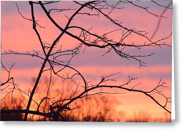 Greeting Card featuring the photograph Branches Meet The Sky by Dacia Doroff
