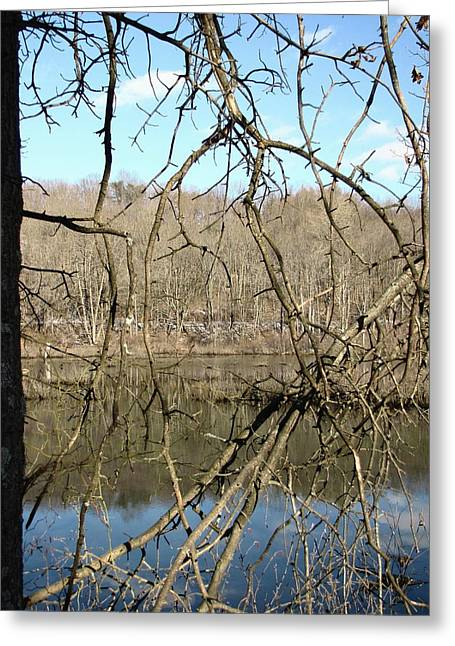 Greeting Card featuring the photograph Branches by Melissa Stoudt