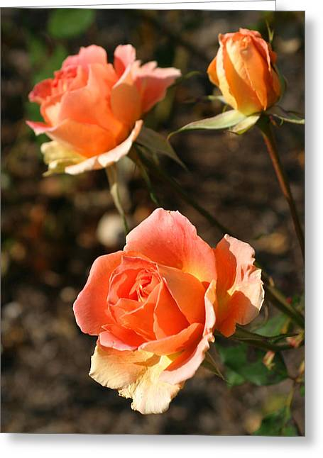 Brass Band Roses In Autumn Greeting Card