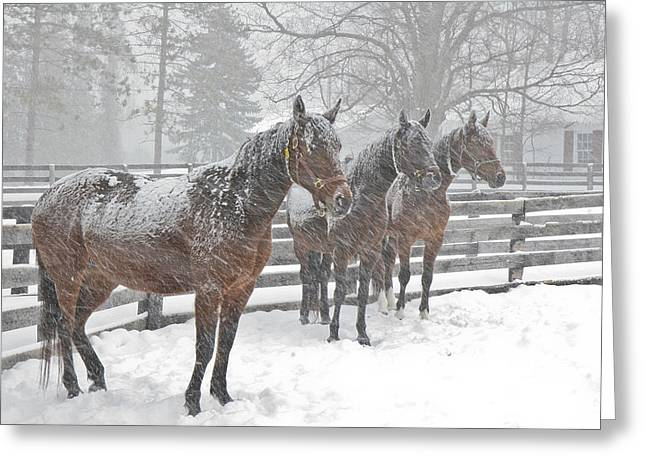 Greeting Card featuring the photograph Braving The Storm by Gary Hall