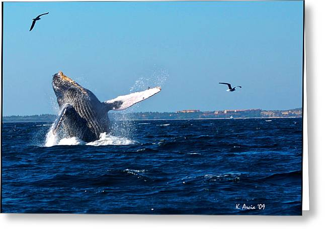 Breaching Whale Greeting Card