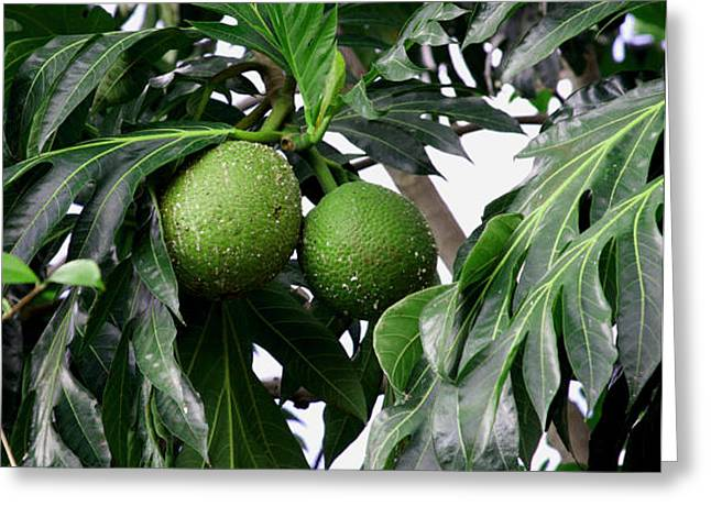 Breadfruit Greeting Card by  George Griffiths