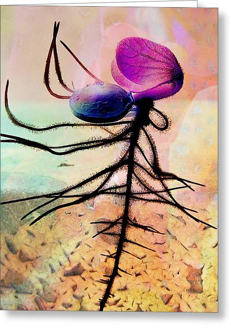 Break Forth Into Joy Greeting Card by Shirley Sirois