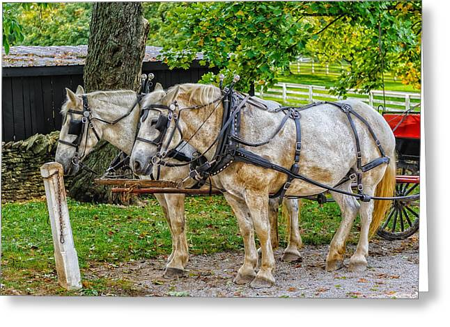 Greeting Card featuring the photograph Break Time On A Kentucky Farm - V1 by Frank J Benz