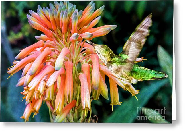 Breakfast For A Hummer Greeting Card