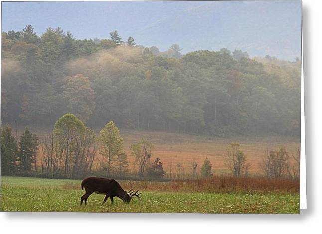 Breakfast In Cades Cove Greeting Card by Dan Sproul