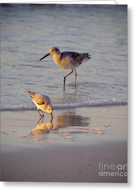 Breakfast In The Surf Greeting Card