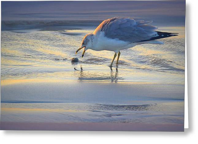 Breakfast On The Beach Greeting Card by Toni Abdnour