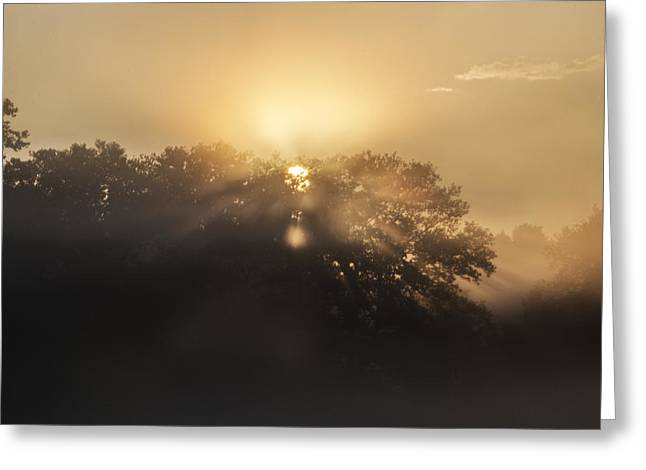 Breaking Sun Through The Trees Greeting Card by Bill Cannon