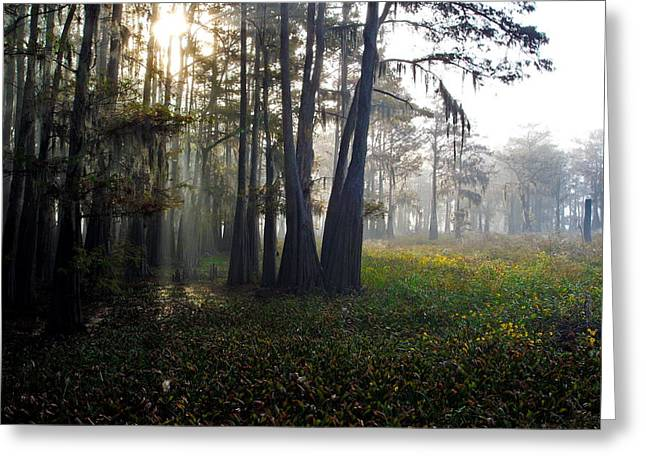 Breaking Through Morning Fog Greeting Card