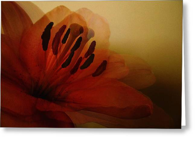 Breath Of The Lily Greeting Card by Marianna Mills