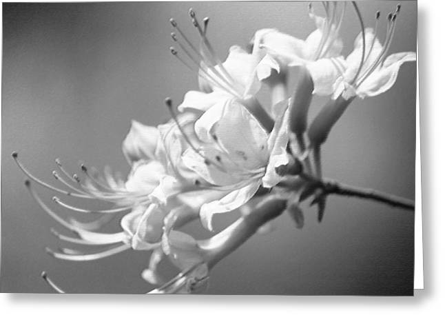 Breathtaking In Black And White Greeting Card by Suzanne Gaff