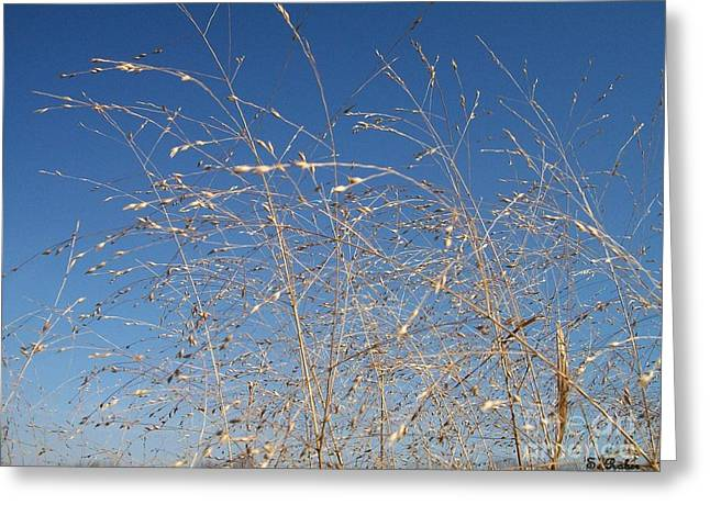 Greeting Card featuring the photograph Breeze by Sara  Raber