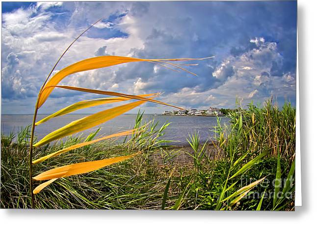 Breezy Day On Long Beach Island Greeting Card