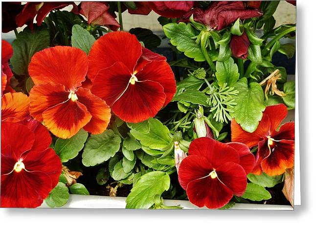 Greeting Card featuring the photograph Brick Pansies by VLee Watson