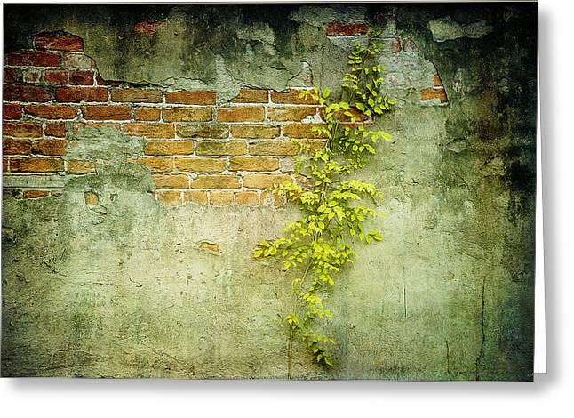Brick Wall Greeting Card by Linda Olsen
