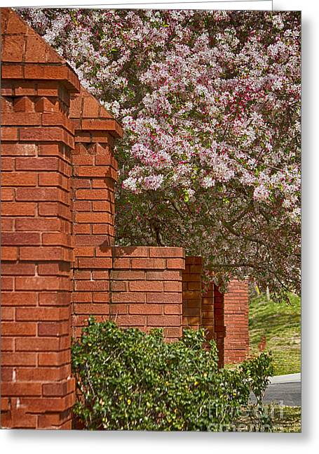 Bricks And Blossoms Greeting Card by Anne Rodkin