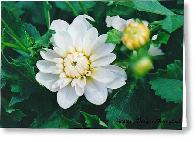 Bride To Be Dahlias Greeting Card