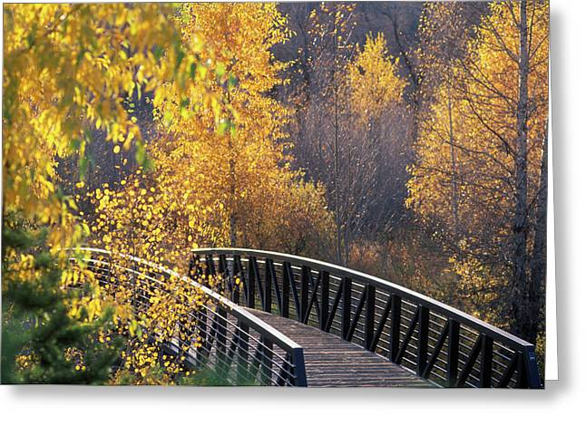 Bridge And Trees In Autumn Steamboat Greeting Card