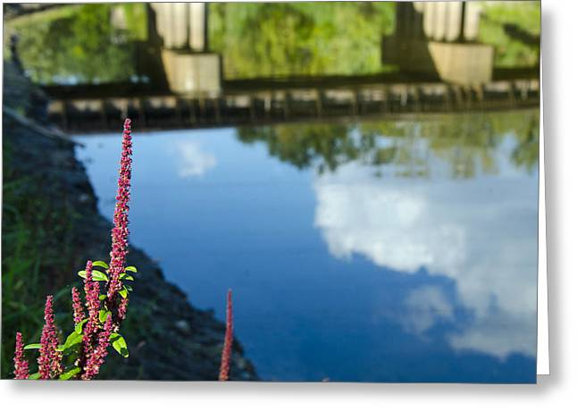 Bridge Reflection Greeting Card by Shane McCallister