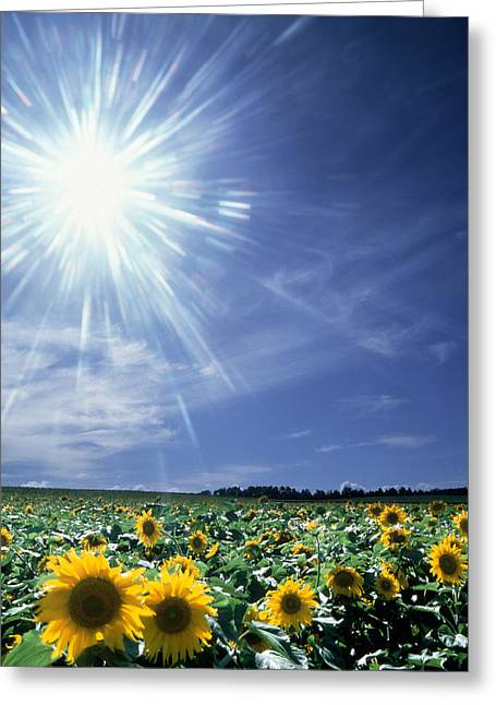 Bright Burst Of White Light Above Field Greeting Card