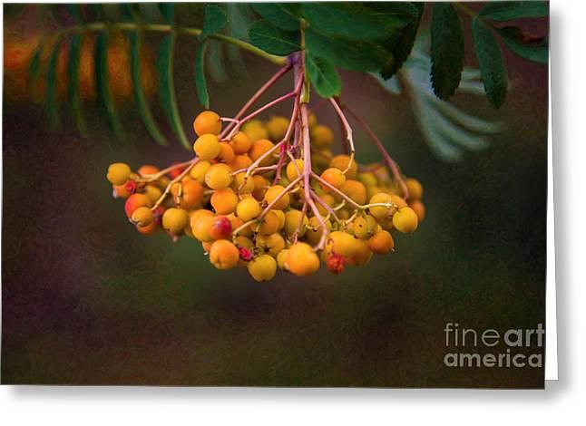 Bright Bursting Berries Garden Art By Omaste Witkowski Greeting Card