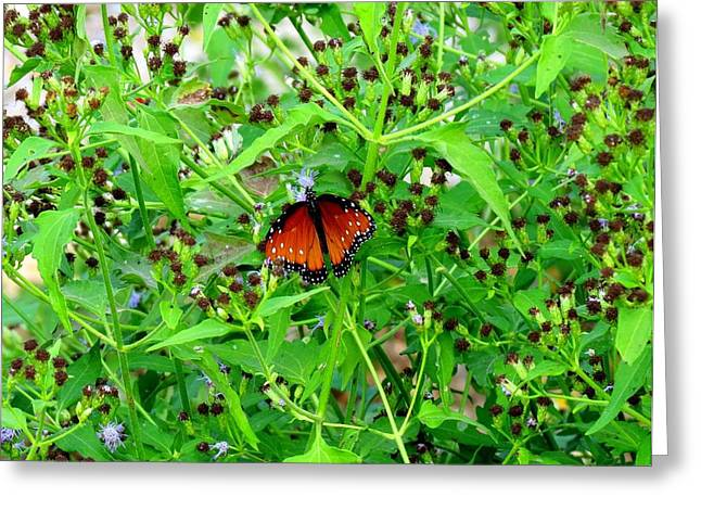 Greeting Card featuring the photograph Bright Butterfly by David  Norman