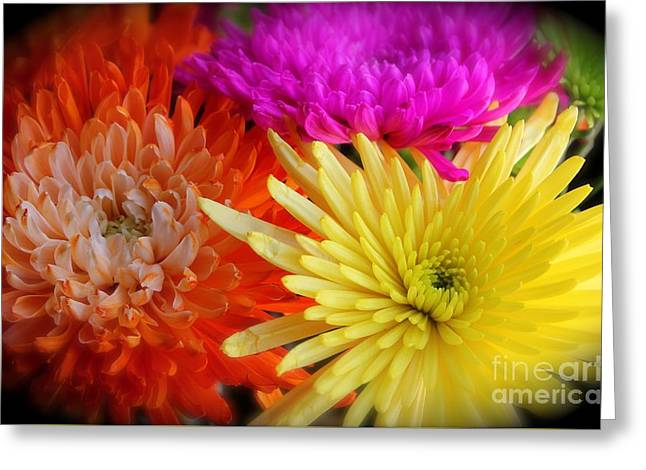 Bright Chrysanthemums Greeting Card