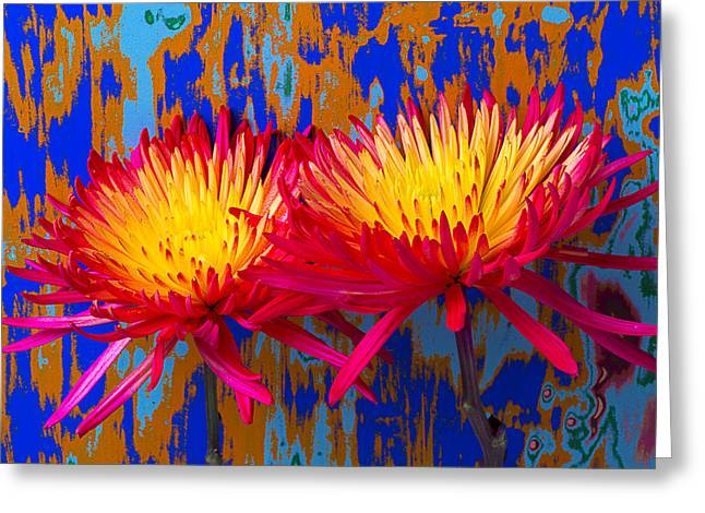 Bright Colorful Mums Greeting Card by Garry Gay