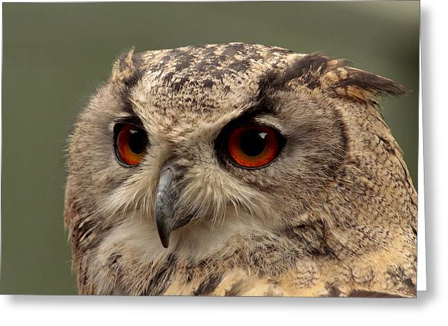 Bright Eyed Eagle Owl  Greeting Card by Simon Gregory
