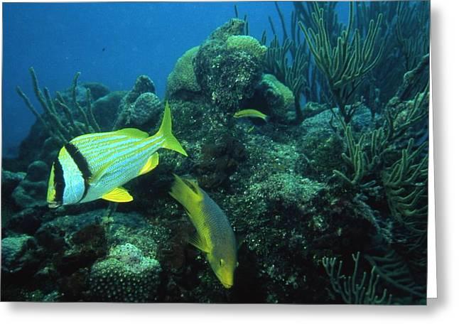 Bright Fish Greeting Card
