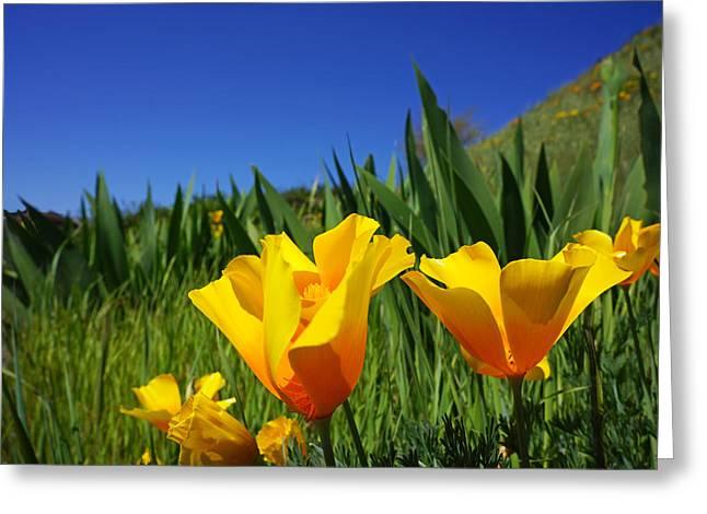 Bright Orange Poppy Meadow Art Prints Greeting Card by Baslee Troutman