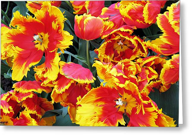 Bright Parrot Tulips Greeting Card