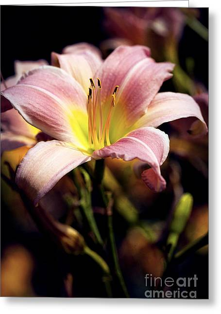 Bright Pink Lily Greeting Card by Lee Craig