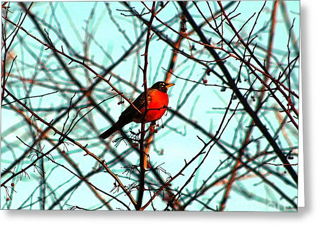 Bright Red Robin Greeting Card