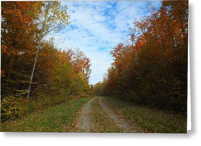 Bright Trail Greeting Card by Gene Cyr